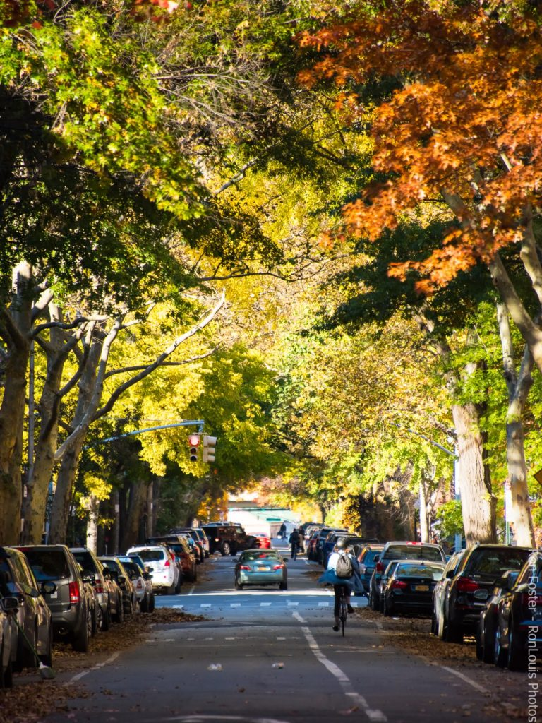 Fort Greene Environmentalism, photo by Ron Foster - RonLouis Photos